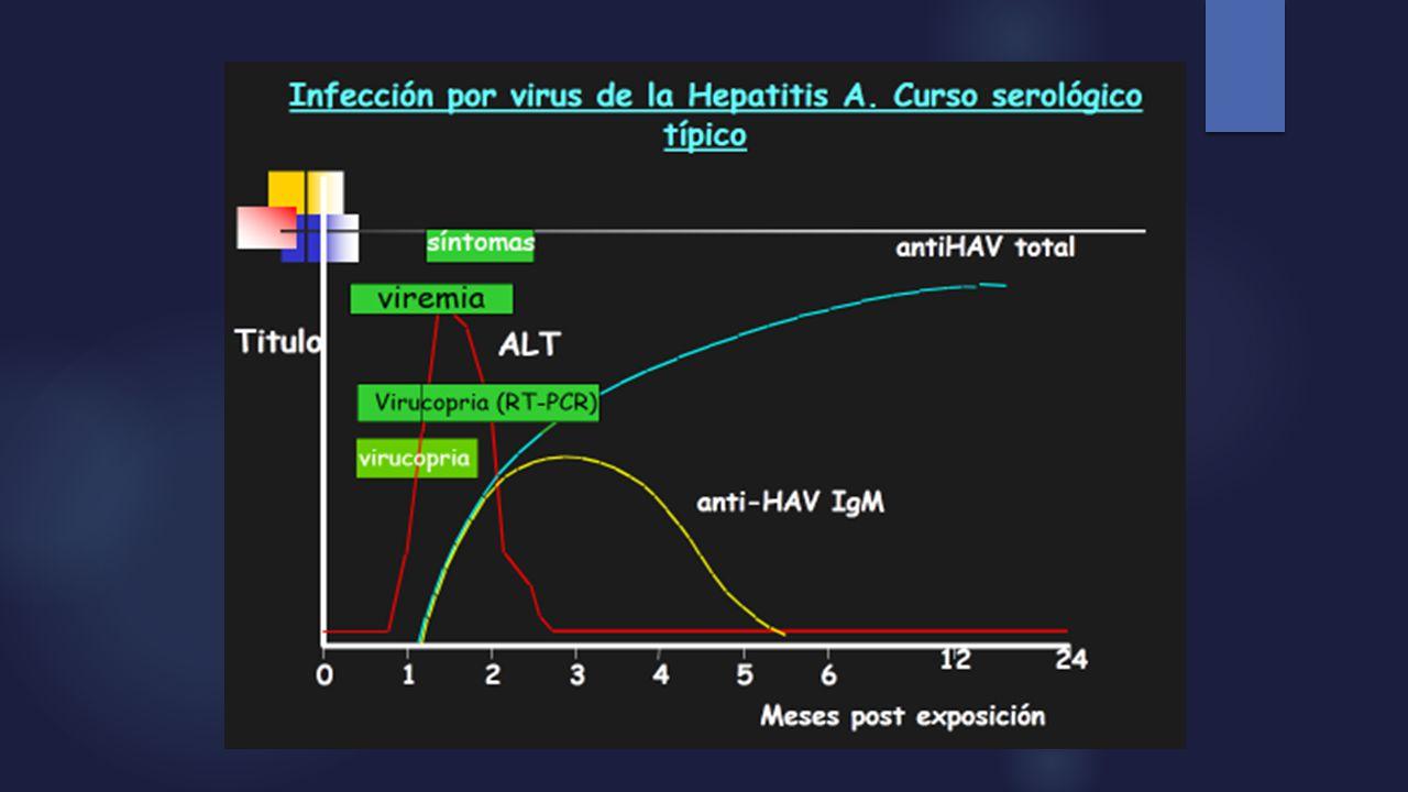 Imununogenicidad y Eficacia de la Vacuna de Hepatitis A Vacuna a virus inactivado Inmunogenicidad y eficacia clínica: - 15 días induce una seroconverción (antiHAV >20 mU/ml) 88-93 % - al mes en el 95-99% - > 30 días de la 2° dosis ascienden al 100 %.