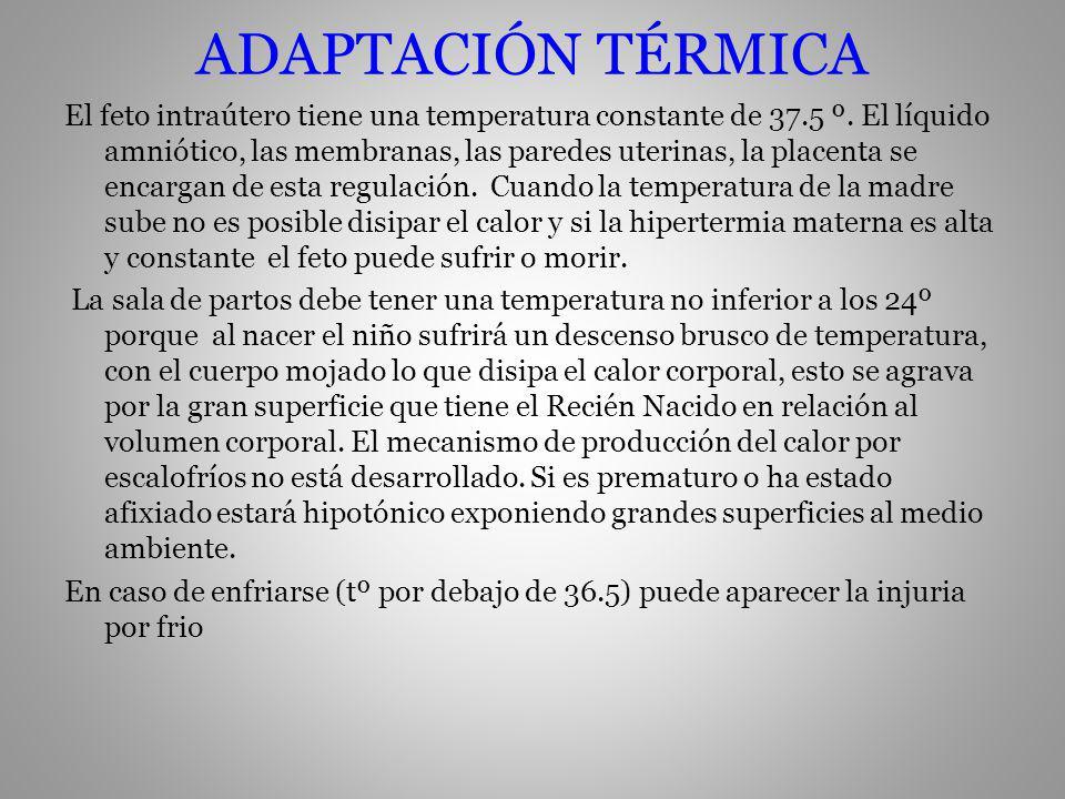 ADAPTACIÓN TÉRMICA El feto intraútero tiene una temperatura constante de 37.5 º. El líquido amniótico, las membranas, las paredes uterinas, la placent