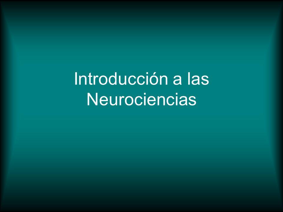 Introducción a las Neurociencias