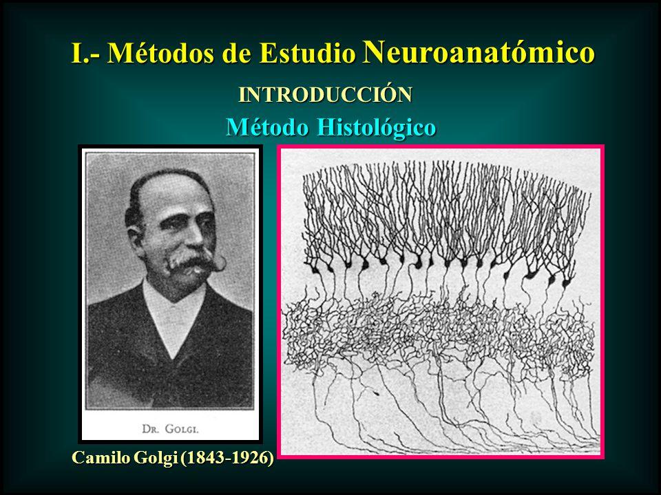 I.- Métodos de Estudio Neuroanatómico INTRODUCCIÓN Camilo Golgi (1843-1926) Método Histológico