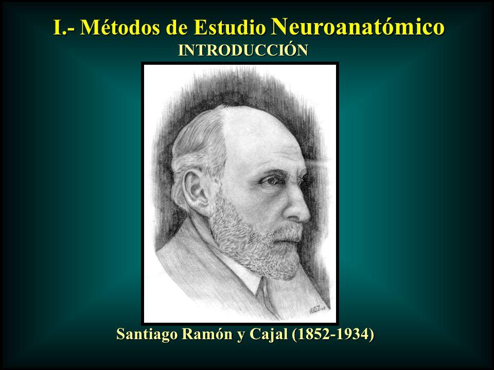 I.- Métodos de Estudio Neuroanatómico INTRODUCCIÓN Santiago Ramón y Cajal (1852-1934)