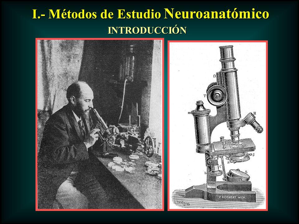 I.- Métodos de Estudio Neuroanatómico INTRODUCCIÓN