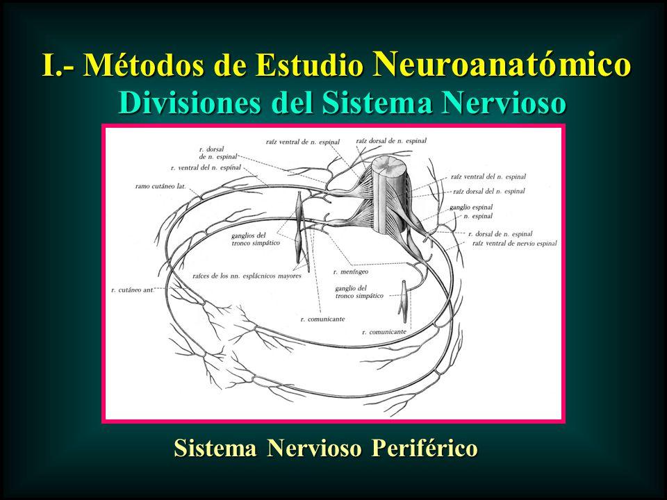 I.- Métodos de Estudio Neuroanatómico Divisiones del Sistema Nervioso Sistema Nervioso Periférico