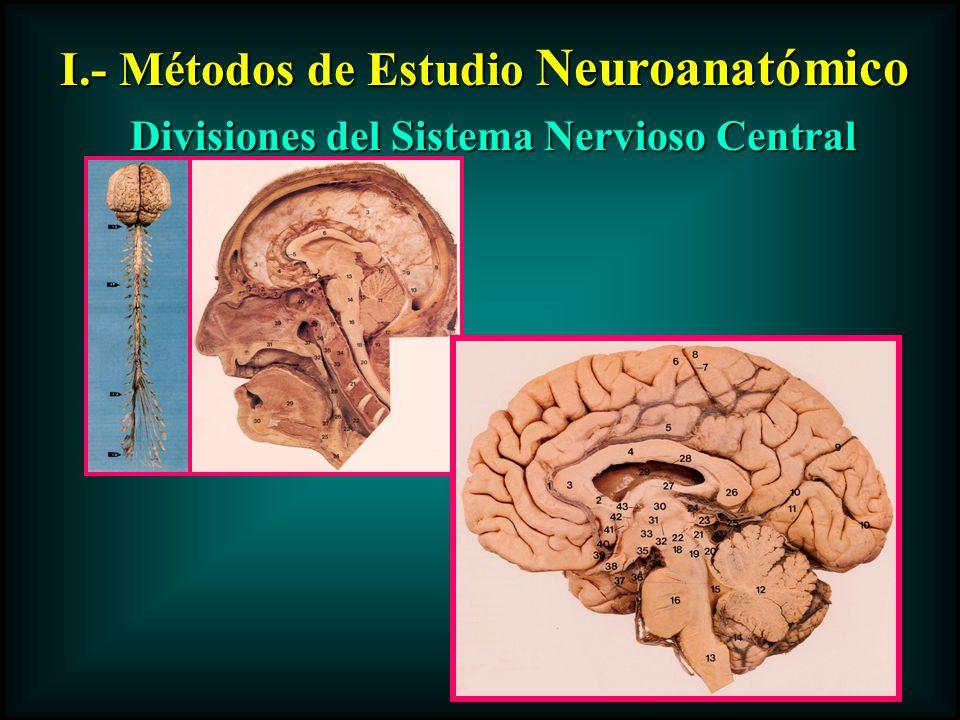 I.- Métodos de Estudio Neuroanatómico Divisiones del Sistema Nervioso Central