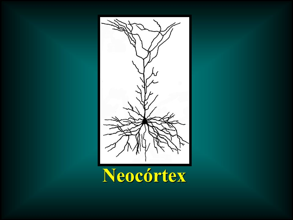 Neocórtex Neocórtex