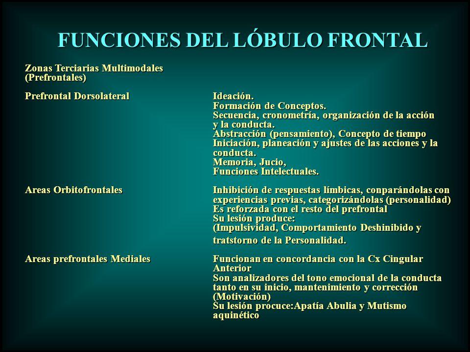 Zonas Terciarias Multimodales (Prefrontales) Prefrontal DorsolateralIdeación. Formación de Conceptos. Secuencia, cronometría, organización de la acció