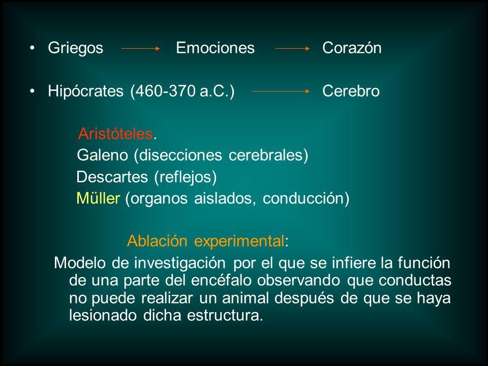GriegosEmocionesCorazón Hipócrates (460-370 a.C.)Cerebro Aristóteles. Galeno (disecciones cerebrales) Descartes (reflejos) Müller (organos aislados, c