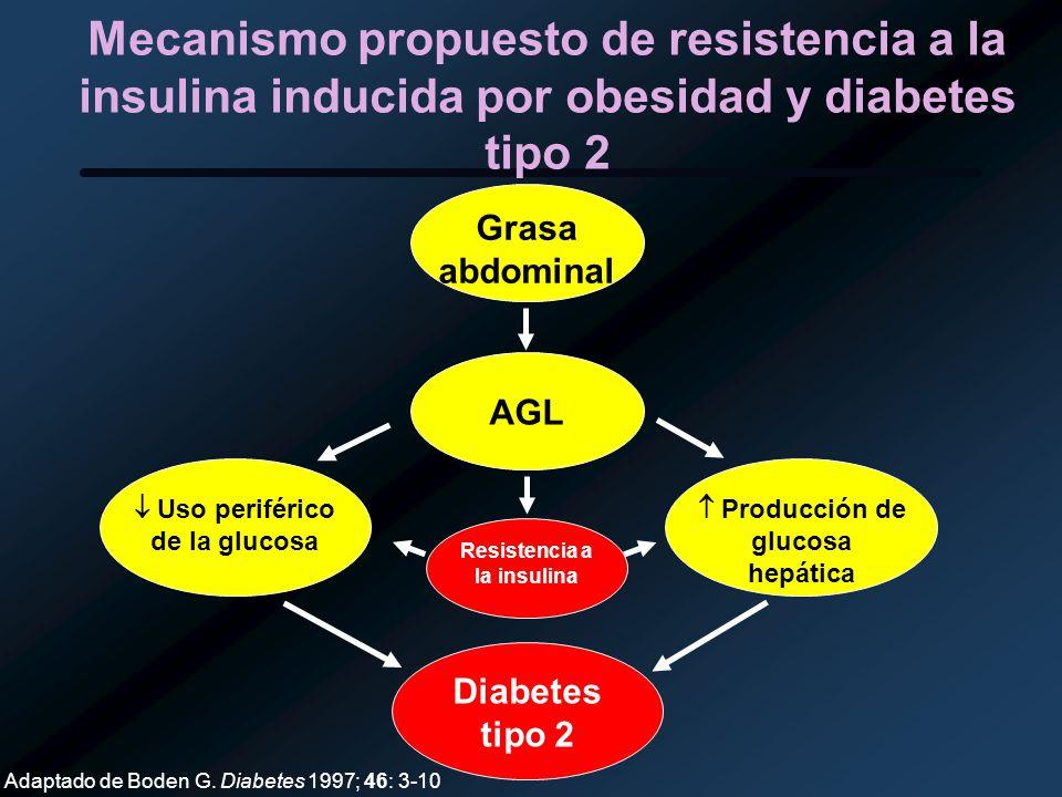 Mecanismo propuesto de resistencia a la insulina inducida por obesidad y diabetes tipo 2 Adaptado de Boden G. Diabetes 1997; 46: 3-10 Grasa abdominal