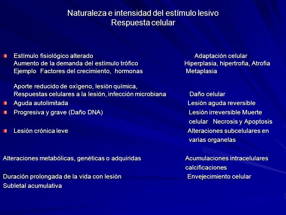 Naturaleza e intensidad del estímulo lesivo Respuesta celular Estímulo fisiológico alterado Adaptación celular Aumento de la demanda del estímulo tróf