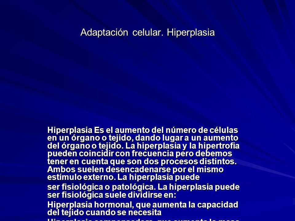 Adaptación celular. Hiperplasia Hiperplasia Es el aumento del número de células en un órgano o tejido, dando lugar a un aumento del órgano o tejido. L