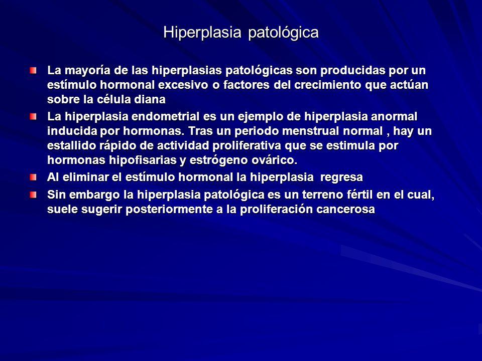Hiperplasia patológica La mayoría de las hiperplasias patológicas son producidas por un estímulo hormonal excesivo o factores del crecimiento que actú
