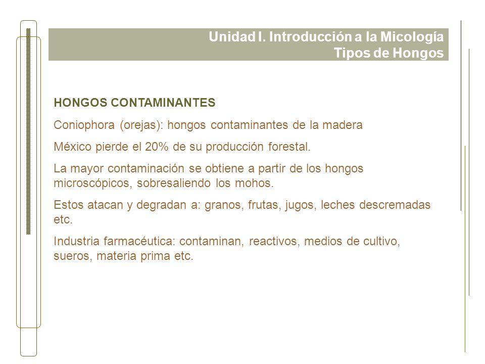 Unidad I. Introducción a la Micología Tipos de Hongos HONGOS CONTAMINANTES Coniophora (orejas): hongos contaminantes de la madera México pierde el 20%