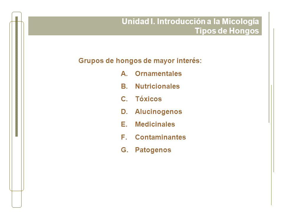 Unidad I. Introducción a la Micología Tipos de Hongos Grupos de hongos de mayor interés: A.Ornamentales B.Nutricionales C.Tóxicos D.Alucinogenos E.Med