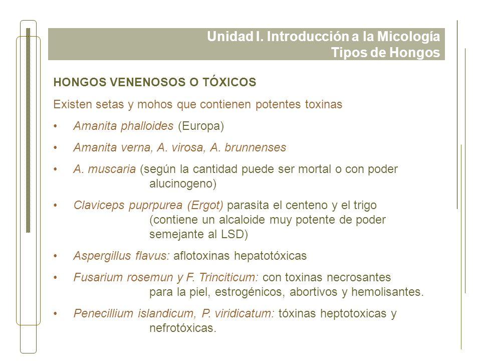 Unidad I. Introducción a la Micología Tipos de Hongos HONGOS VENENOSOS O TÓXICOS Existen setas y mohos que contienen potentes toxinas Amanita phalloid