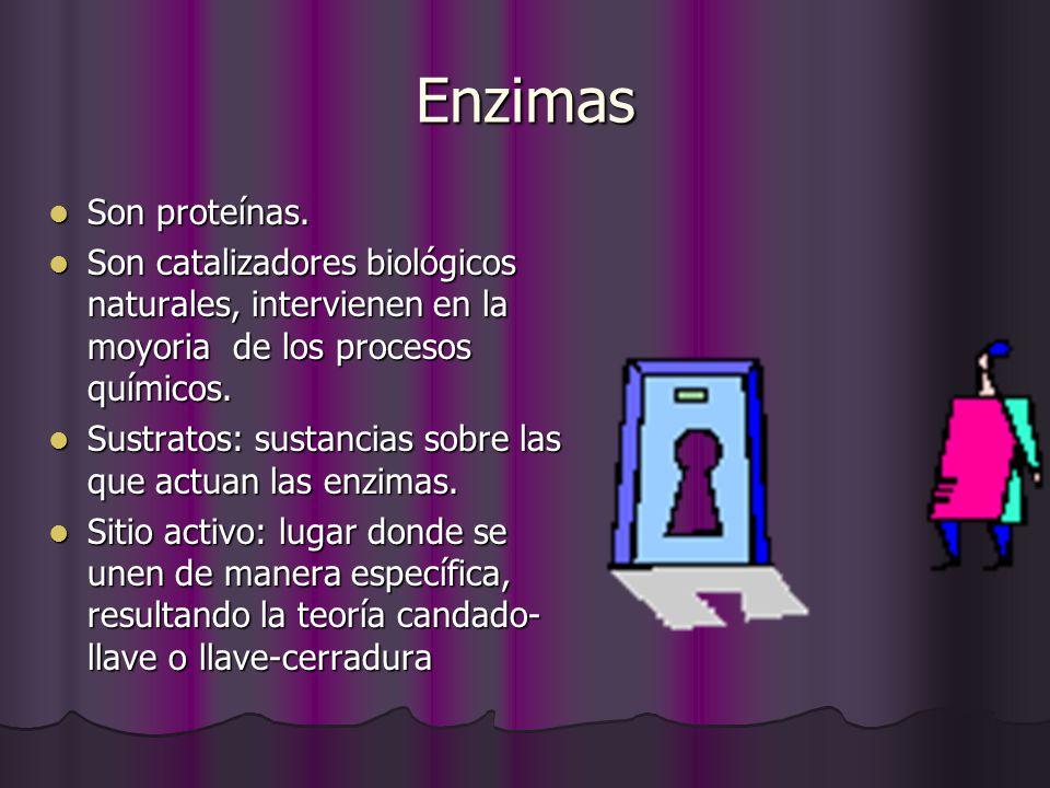 Enzimas Son proteínas. Son proteínas. Son catalizadores biológicos naturales, intervienen en la moyoria de los procesos químicos. Son catalizadores bi