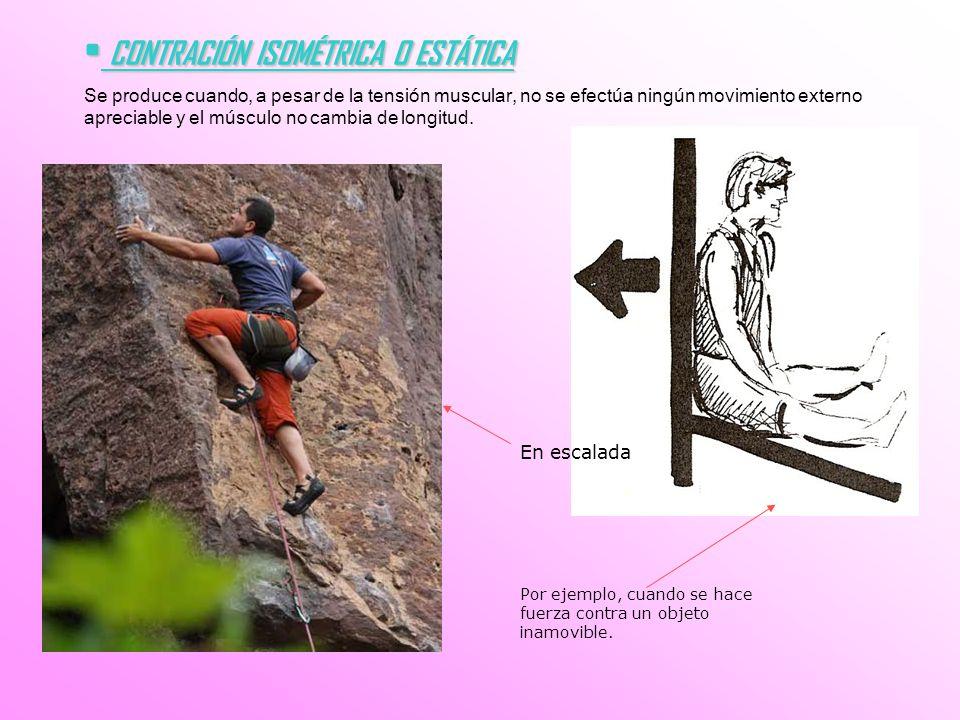 CONTRACIÓN ISOMÉTRICA O ESTÁTICA CONTRACIÓN ISOMÉTRICA O ESTÁTICA Se produce cuando, a pesar de la tensión muscular, no se efectúa ningún movimiento e