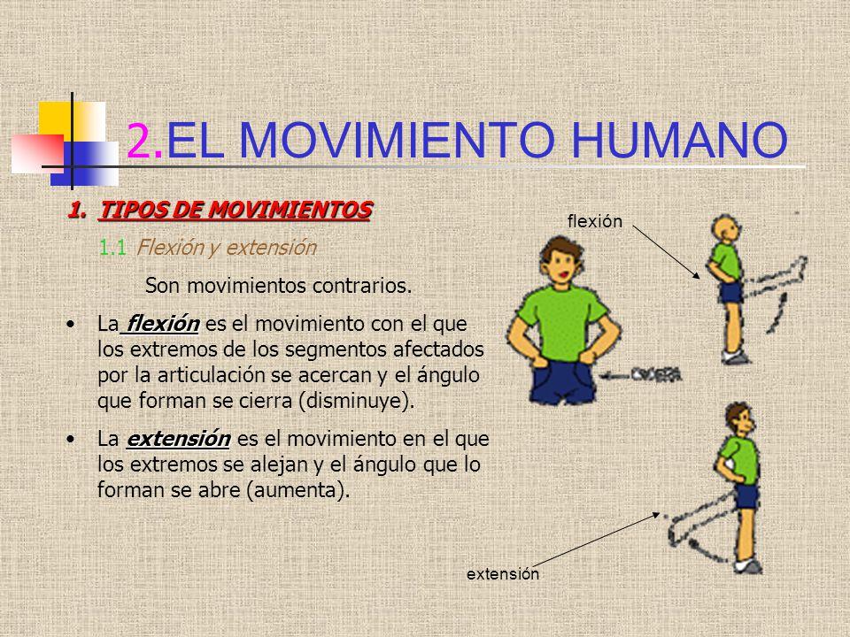 2. EL MOVIMIENTO HUMANO 1.TIPOS DE MOVIMIENTOS 1.1 Flexión y extensión Son movimientos contrarios. flexiónLa flexión es el movimiento con el que los e