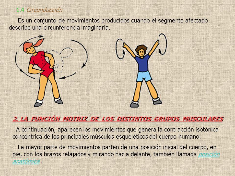 1.4 Circunducción Es un conjunto de movimientos producidos cuando el segmento afectado describe una circunferencia imaginaria. 2. LA FUNCIÓN MOTRIZ DE