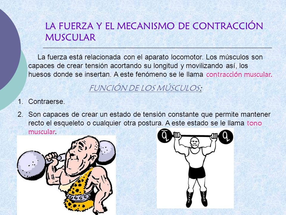 LA FUERZA Y EL MECANISMO DE CONTRACCIÓN MUSCULAR La fuerza está relacionada con el aparato locomotor. Los músculos son capaces de crear tensión acorta