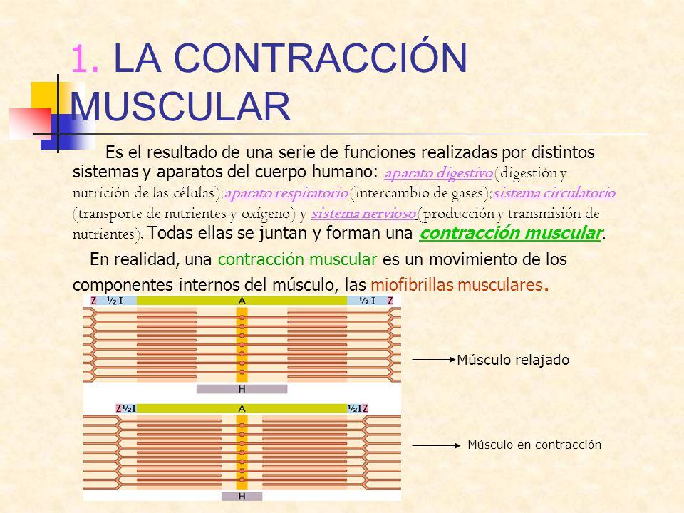 1. LA CONTRACCIÓN MUSCULAR Es el resultado de una serie de funciones realizadas por distintos sistemas y aparatos del cuerpo humano: aparato digestivo