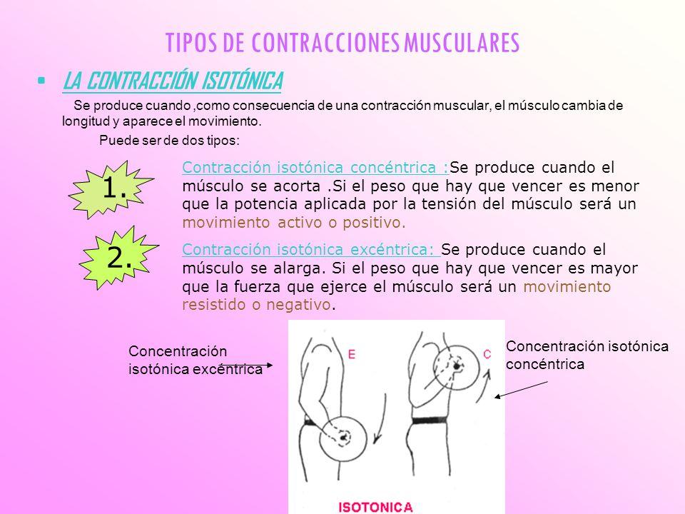 TIPOS DE CONTRACCIONES MUSCULARES LA CONTRACCIÓN ISOTÓNICA Se produce cuando,como consecuencia de una contracción muscular, el músculo cambia de longi