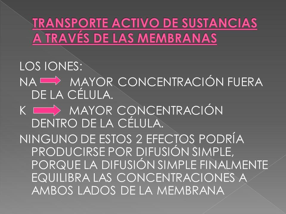 LOS IONES: NA MAYOR CONCENTRACIÓN FUERA DE LA CÉLULA. K MAYOR CONCENTRACIÓN DENTRO DE LA CÉLULA. NINGUNO DE ESTOS 2 EFECTOS PODRÍA PRODUCIRSE POR DIFU