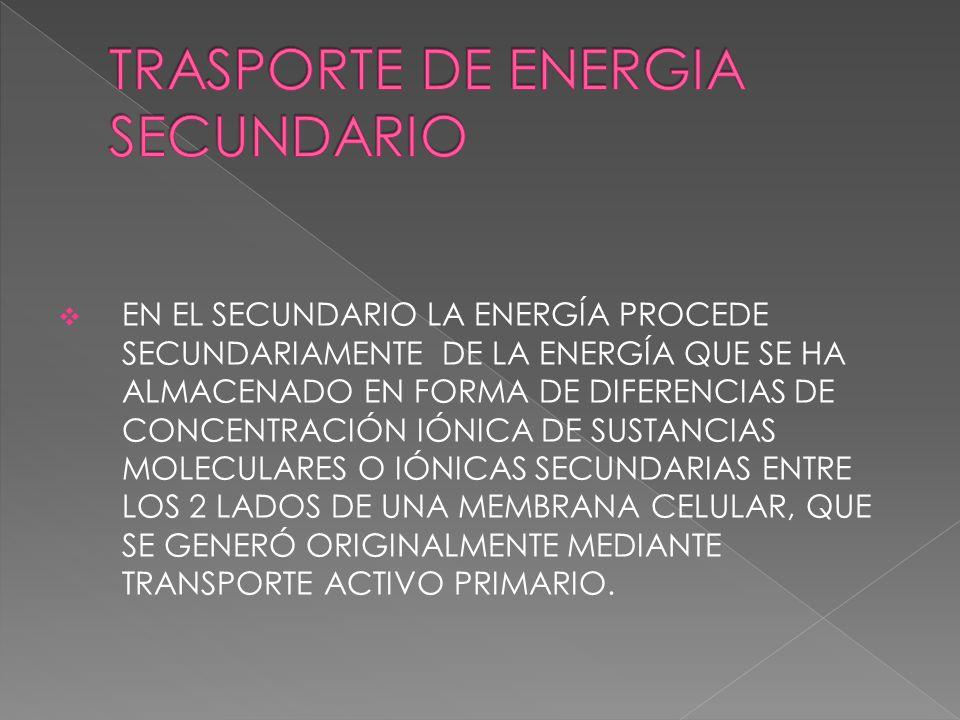 EN EL SECUNDARIO LA ENERGÍA PROCEDE SECUNDARIAMENTE DE LA ENERGÍA QUE SE HA ALMACENADO EN FORMA DE DIFERENCIAS DE CONCENTRACIÓN IÓNICA DE SUSTANCIAS M