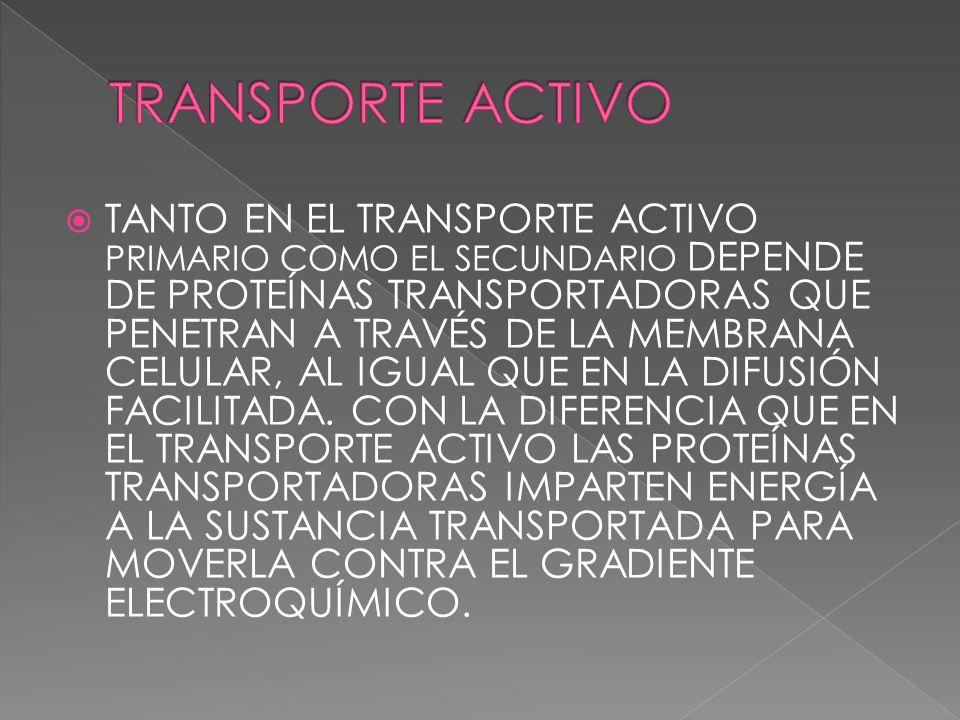 TANTO EN EL TRANSPORTE ACTIVO PRIMARIO COMO EL SECUNDARIO DEPENDE DE PROTEÍNAS TRANSPORTADORAS QUE PENETRAN A TRAVÉS DE LA MEMBRANA CELULAR, AL IGUAL