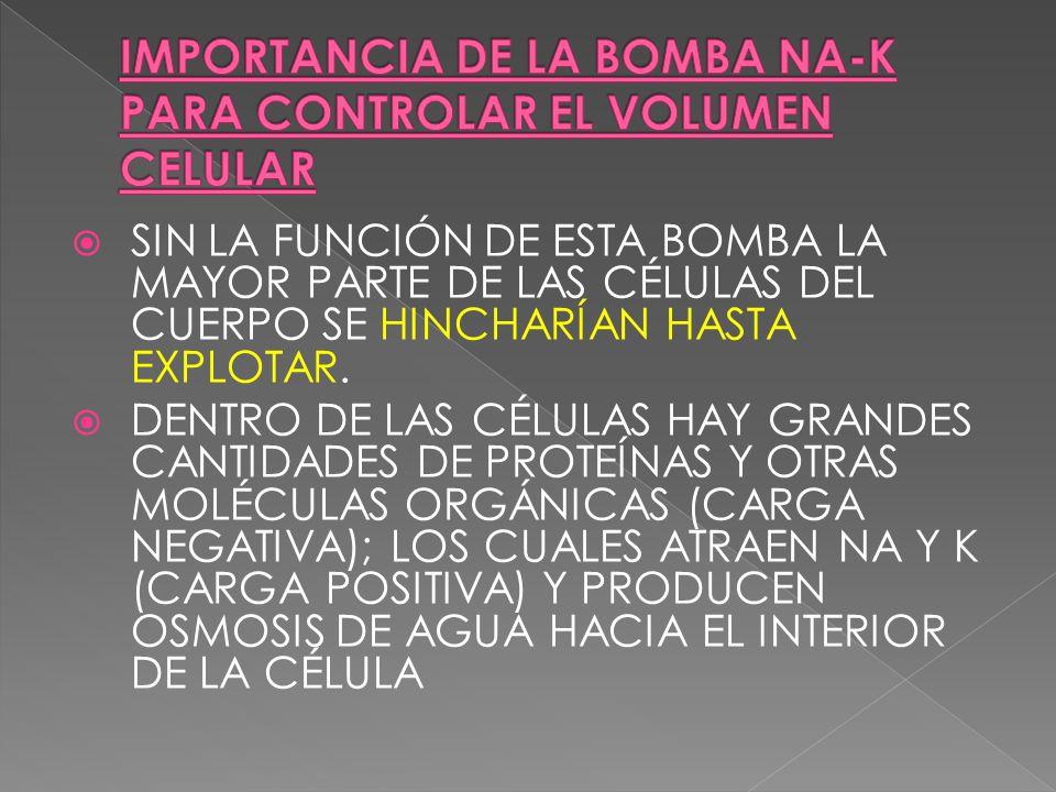 SIN LA FUNCIÓN DE ESTA BOMBA LA MAYOR PARTE DE LAS CÉLULAS DEL CUERPO SE HINCHARÍAN HASTA EXPLOTAR. DENTRO DE LAS CÉLULAS HAY GRANDES CANTIDADES DE PR