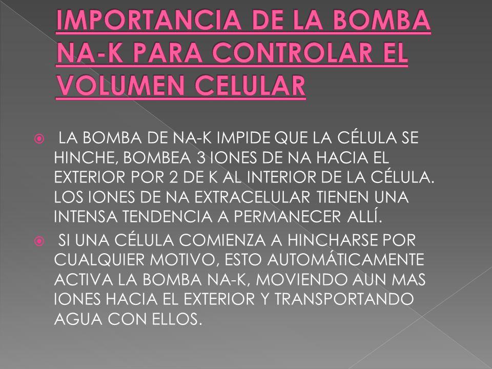 LA BOMBA DE NA-K IMPIDE QUE LA CÉLULA SE HINCHE, BOMBEA 3 IONES DE NA HACIA EL EXTERIOR POR 2 DE K AL INTERIOR DE LA CÉLULA. LOS IONES DE NA EXTRACELU