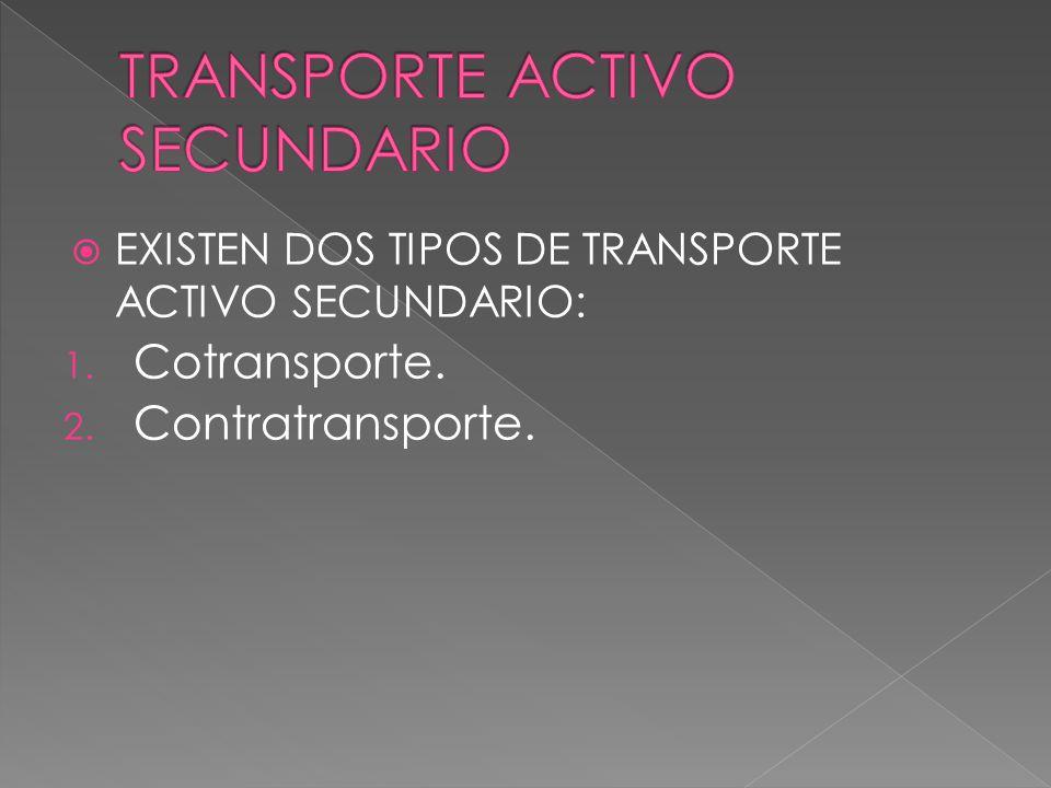 EXISTEN DOS TIPOS DE TRANSPORTE ACTIVO SECUNDARIO: 1. Cotransporte. 2. Contratransporte.