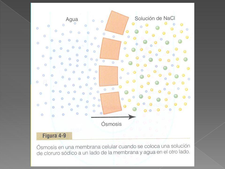 EL COTRANSPORTE CON SODIO DE LOS AMINOÁCIDOS SE PRODUCE DE MANERA SIMILAR QUE PARA LA GLUCOSA.