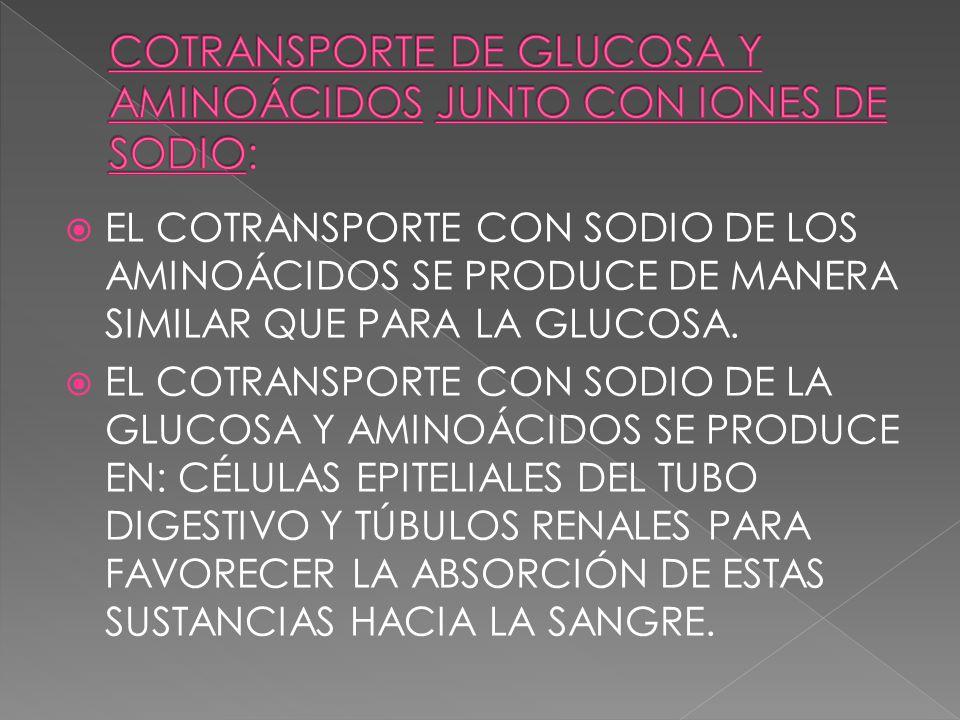 EL COTRANSPORTE CON SODIO DE LOS AMINOÁCIDOS SE PRODUCE DE MANERA SIMILAR QUE PARA LA GLUCOSA. EL COTRANSPORTE CON SODIO DE LA GLUCOSA Y AMINOÁCIDOS S