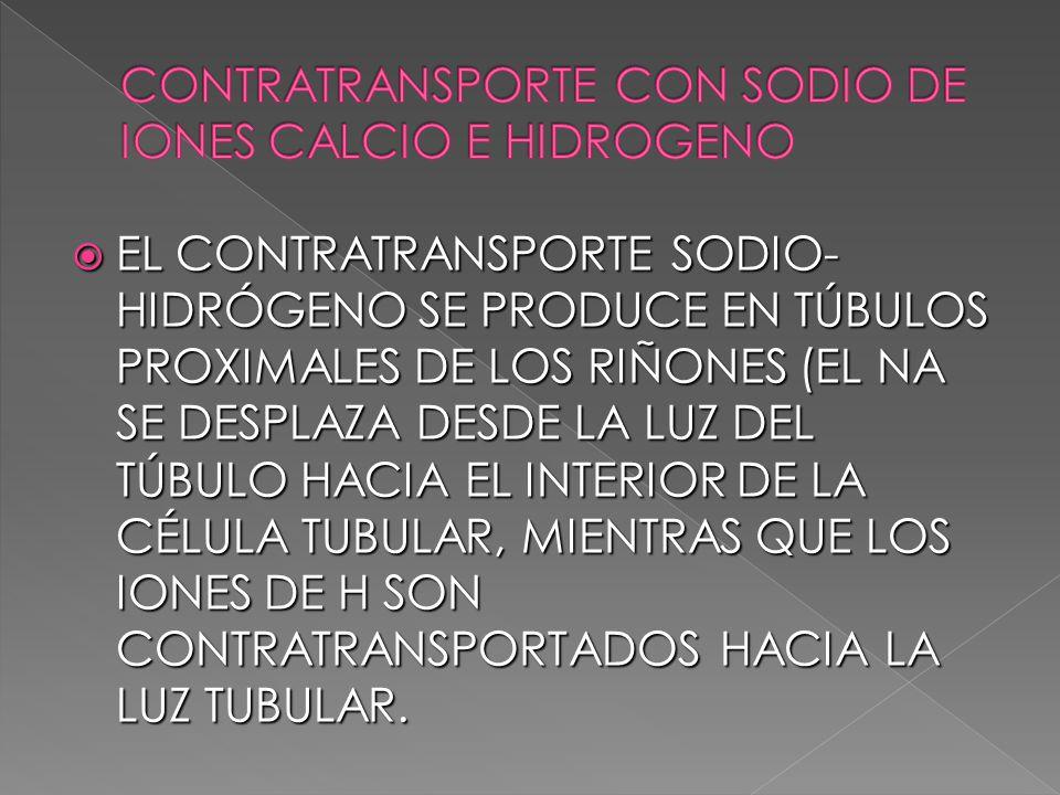EL CONTRATRANSPORTE SODIO- HIDRÓGENO SE PRODUCE EN TÚBULOS PROXIMALES DE LOS RIÑONES (EL NA SE DESPLAZA DESDE LA LUZ DEL TÚBULO HACIA EL INTERIOR DE L