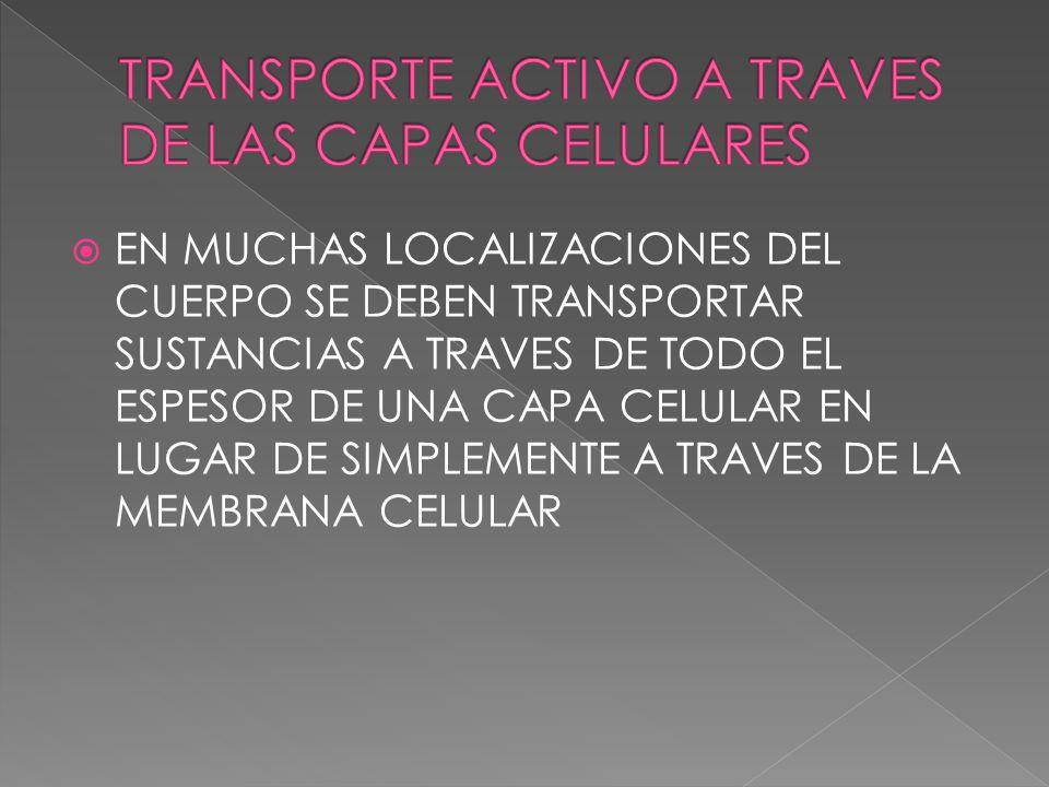 EN MUCHAS LOCALIZACIONES DEL CUERPO SE DEBEN TRANSPORTAR SUSTANCIAS A TRAVES DE TODO EL ESPESOR DE UNA CAPA CELULAR EN LUGAR DE SIMPLEMENTE A TRAVES D