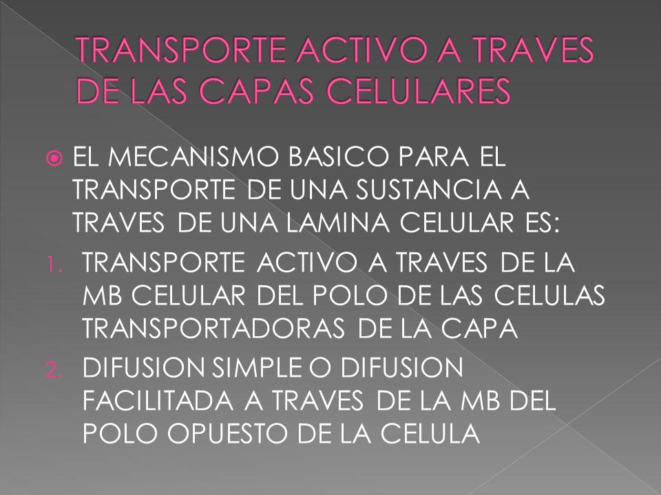 EL MECANISMO BASICO PARA EL TRANSPORTE DE UNA SUSTANCIA A TRAVES DE UNA LAMINA CELULAR ES: 1. TRANSPORTE ACTIVO A TRAVES DE LA MB CELULAR DEL POLO DE