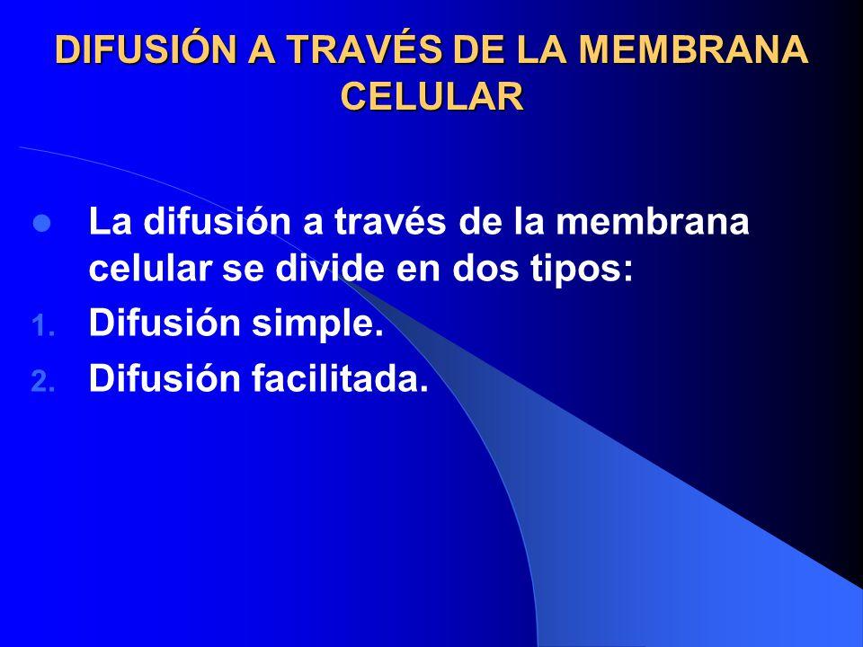 DIFUSIÓN A TRAVÉS DE LA MEMBRANA CELULAR La difusión a través de la membrana celular se divide en dos tipos: 1. Difusión simple. 2. Difusión facilitad