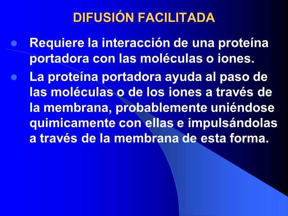 DIFUSIÓN FACILITADA Requiere la interacción de una proteína portadora con las moléculas o iones. La proteína portadora ayuda al paso de las moléculas