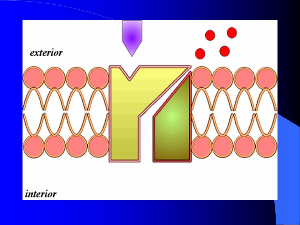 DIFUSIÓN DE SUSTANCIAS LIPOSOLUBES La tasa de difusión de algunas sustancias a través de la membrana es directamente proporcional a su liposolubilidad.