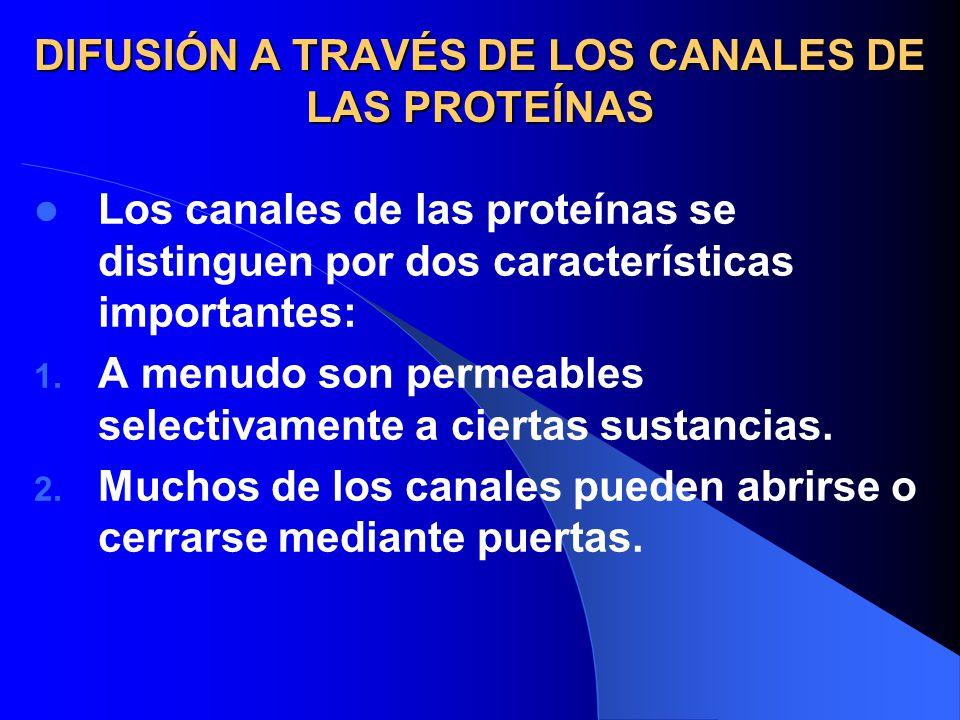 DIFUSIÓN A TRAVÉS DE LOS CANALES DE LAS PROTEÍNAS Los canales de las proteínas se distinguen por dos características importantes: 1. A menudo son perm