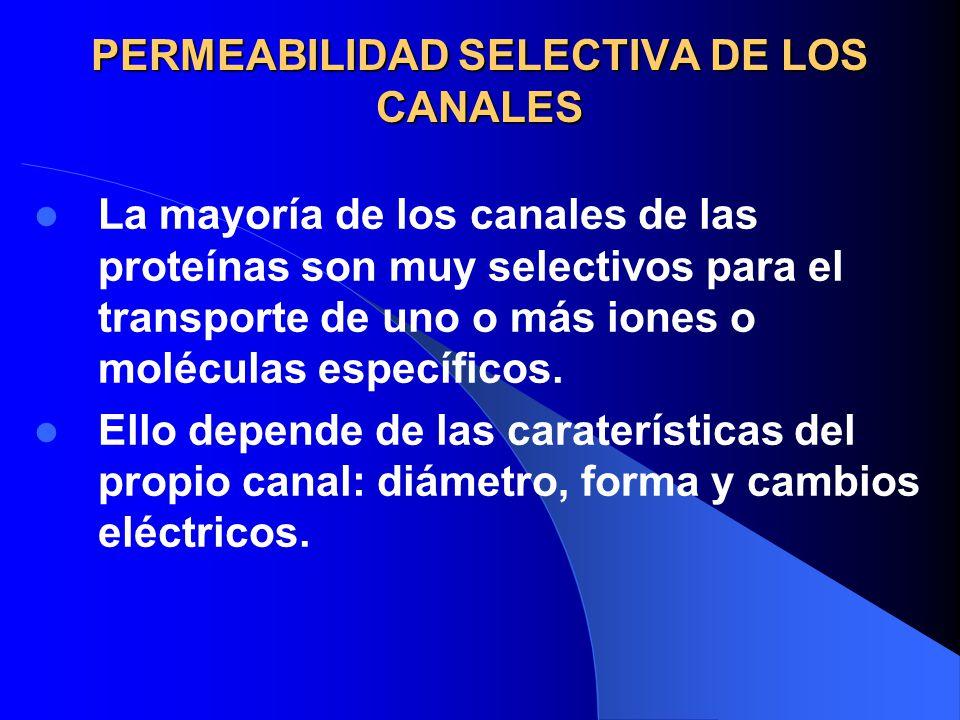 PERMEABILIDAD SELECTIVA DE LOS CANALES La mayoría de los canales de las proteínas son muy selectivos para el transporte de uno o más iones o moléculas