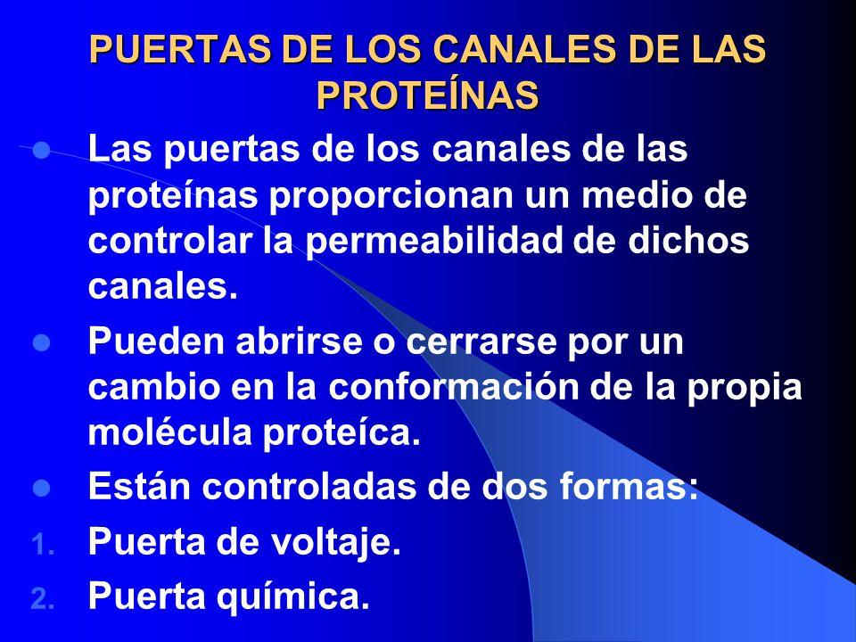 PUERTAS DE LOS CANALES DE LAS PROTEÍNAS Las puertas de los canales de las proteínas proporcionan un medio de controlar la permeabilidad de dichos cana