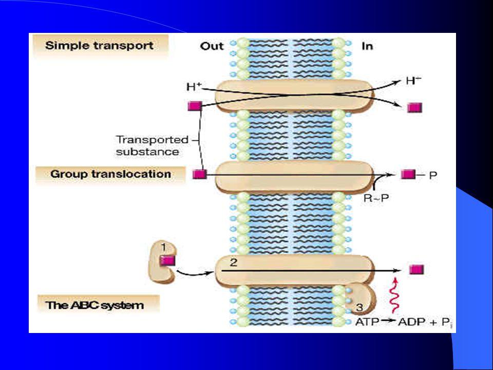 TRANSPORTE ACTIVO El transporte activo se divide en dos tipos de acuerdo con la fuente de energía utilizada para producirlo: 1.