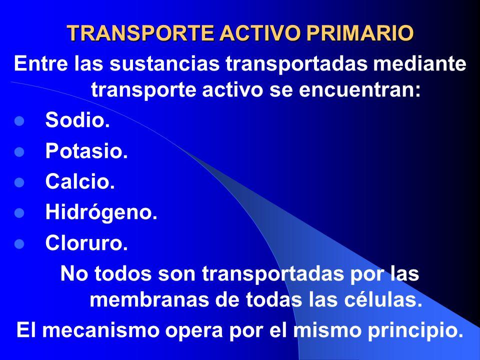 TRANSPORTE ACTIVO PRIMARIO Entre las sustancias transportadas mediante transporte activo se encuentran: Sodio. Potasio. Calcio. Hidrógeno. Cloruro. No