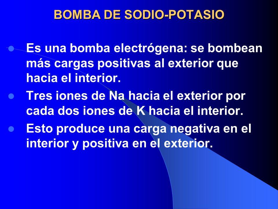 BOMBA DE SODIO-POTASIO Es una bomba electrógena: se bombean más cargas positivas al exterior que hacia el interior. Tres iones de Na hacia el exterior