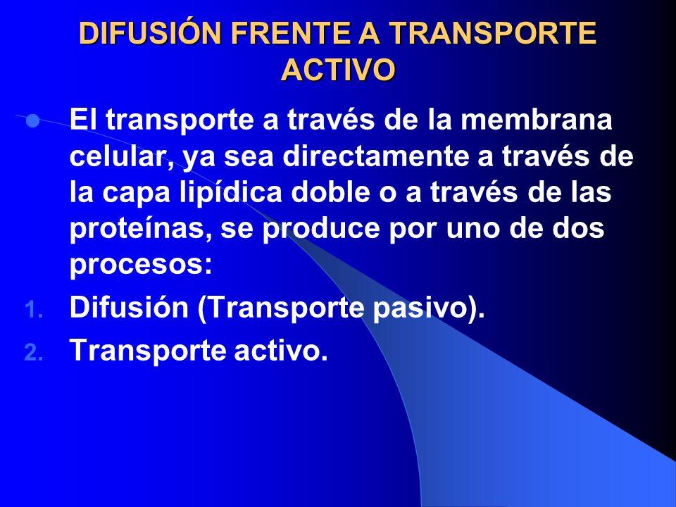 DIFUSIÓN FRENTE A TRANSPORTE ACTIVO Difusión: movimiento molecular aleatoreo de sustancias, molécula a molécula, ya sea a través de espacios intermoleculares de la membrana o en combinación de una proteína portadora.