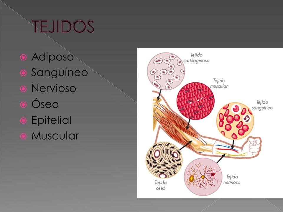 Células: Membrana Núcleo Citoplasma Moléculas orgánicas Proteínas Lípidos Glúcidos Ac. Nucleicos