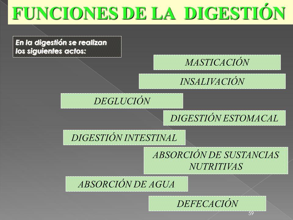 58 Deglución Digestión Estomacal Asimilación Asimilación Masticación. Insalivación Defecación