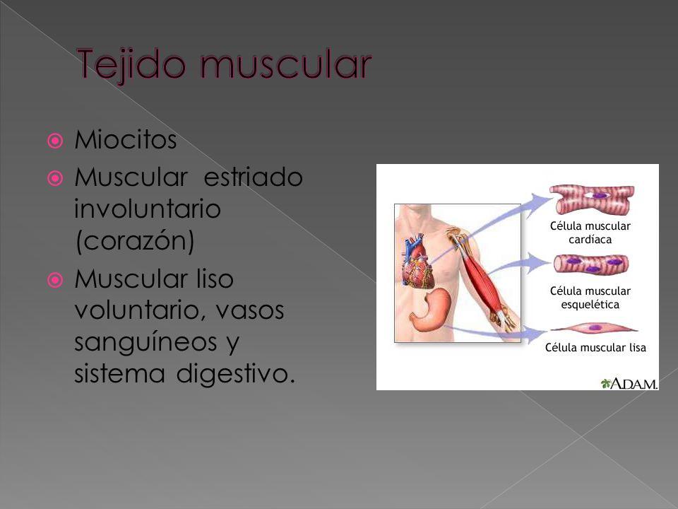 Capas de células que revisten interna y externamente cavidades, conducto, órganos y glándulas. Presenta melanocitos, células nerviosas y de defensa.