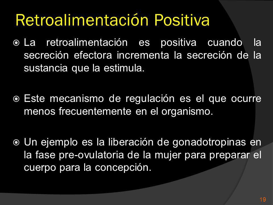 Retroalimentación Positiva La retroalimentación es positiva cuando la secreción efectora incrementa la secreción de la sustancia que la estimula. Este